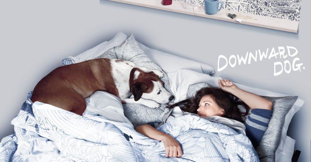 Downward Dog TV Show