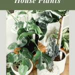 house plant tips and trends